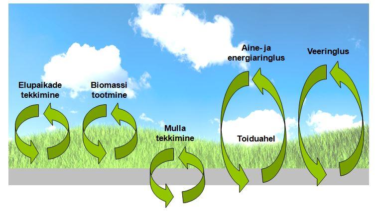 ökosüsteem