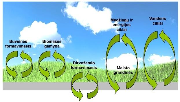 procesai-pievoje-ekosistemos