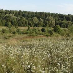 [:en]After grassland restoration this habitat might become rich in biodiversity[:lv]Līdz ar zālāju apsaimniekošanas pasākumu īstenošanu palielinās bioloģsikā daudzveidība[:lt]Šienaujant ir iškirtus krūmus šis dirvonas gali virsti rūšių turtinga pieva[:ee] Rohumaade taastamine aitab sellel muutuda bioloogiliselt mitmekesiseks elupaigaks
