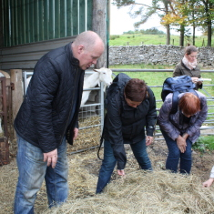 Study visit to Unitied Kingdom - farming experience