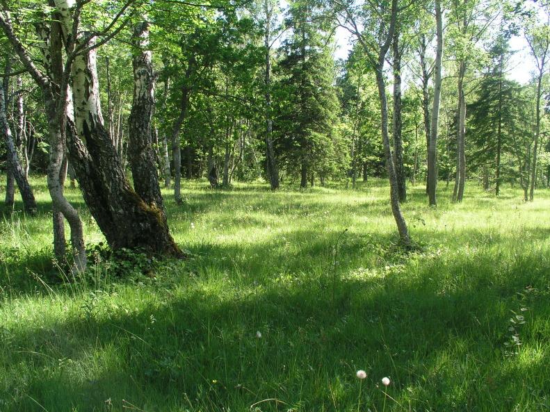 Tagamõisa puisniit Saaremaal (Foto: Valdo Kuusemets)