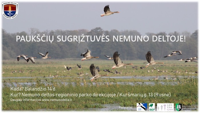 pauksciu-sutiktuves-sugriztuves-2018-nemuno-delta