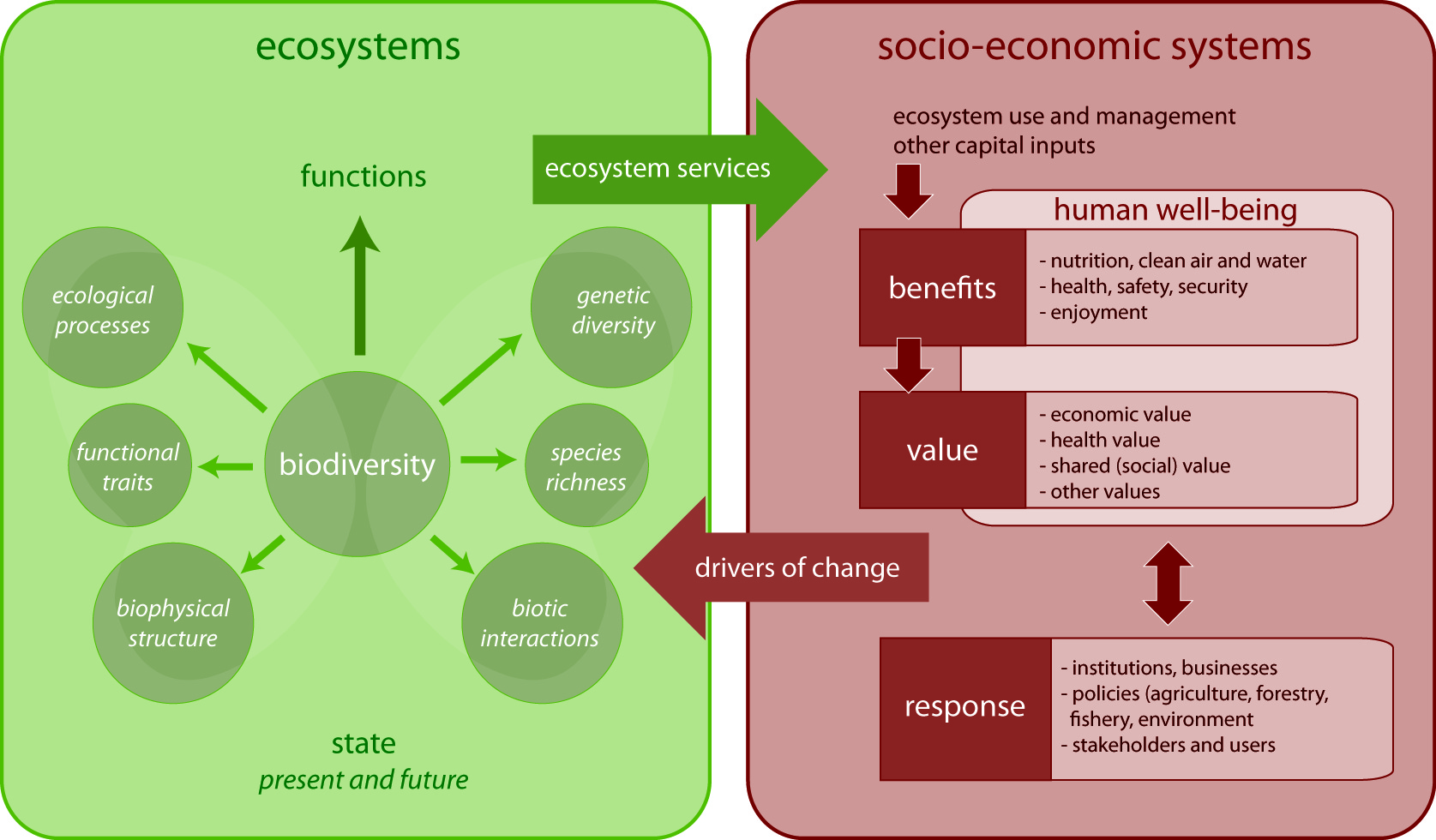 biophysical interactions which lead to diverse ecosystems